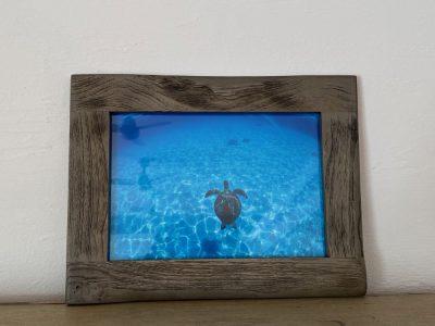 写真プリント古材フレームセット ウミガメ