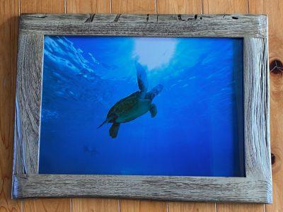 写真プリント古材フレームセット ウミガメと太陽